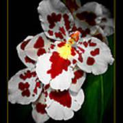Leopard Orchid Art Print