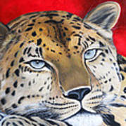 Leopardo Art Print