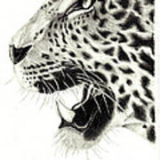 Lep Art Print
