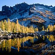 Leprechaun Lake Larch Trees Art Print