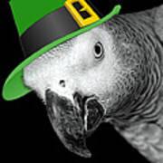 Leprechaun Parrot Art Print