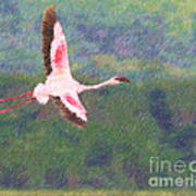 Lesser Flamingo Phoenicopterus Minor Flying Art Print