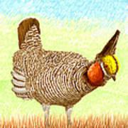 Lesser Prairie Chicken Art Print