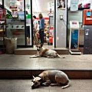 Let Sleeping Dogs Lie Where They May Art Print