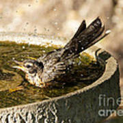 Let The Water Fly Art Print