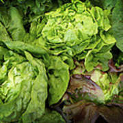 Lettuce Go Forward Art Print