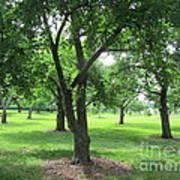 Liberty Hall - Apple Orchards Art Print