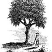 Liberty Tree, 1765 Art Print