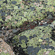 Lichen And Granite Img 6187 Art Print