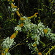 Lichen And Moss Art Print