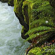 Lichen Covered Rocks With Stream In Oregon Art Print