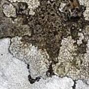Lichen Mosaic Art Print