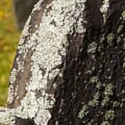 Lichen On Headstone Art Print