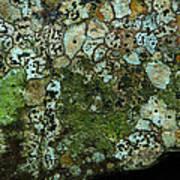 Lichen On Rock In Suck Creek Art Print