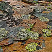 Lichens Along Trail To Plain Of Six Glaciers In Banff National Park-alberta-canada Art Print