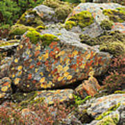 Lichens And Moss In Glen Strathfarrar Art Print