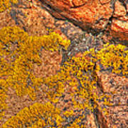 Lichens On The Shoreline Rocks 2 Art Print