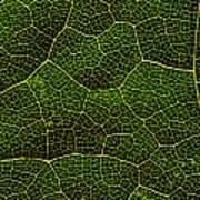 Life Grid In A Leaf Art Print