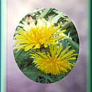Life Is Made Up Of Dandelions Art Print