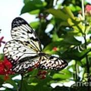 Light And Butterfly Art Print