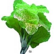 Light Green Iris Art Print