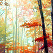 Light In The Forest Art Print by William Schmid