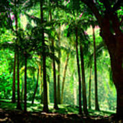 Light In The Jungles. Viridian Greens. Mauritius Art Print