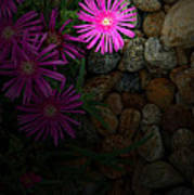 Light In The Rock Garden Art Print