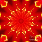 Light On A Tulip 2 Art Print