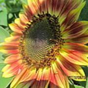 Light-shade Sunflower Art Print
