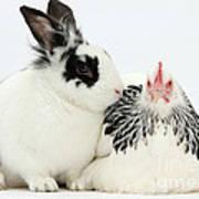 Light Sussex Bantam Hen And Rabbit Art Print