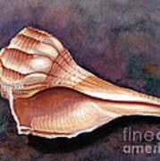 Lightning Whelk Art Print