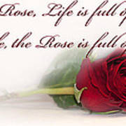Like The Rose Art Print