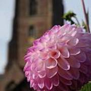Lilac Dahlia In An English Churchyard Art Print