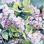 Lilac Delight Art Print