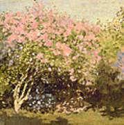 Lilac In The Sun, 1873 Art Print