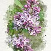 Lilac Watercolor Art Art Print