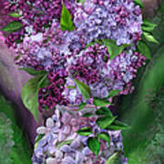 Lilacs In Lilac Vase Art Print