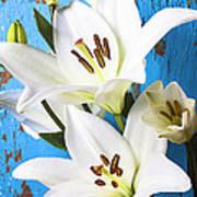 Lilies Against Blue Wall Art Print
