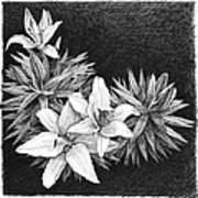 Lilies In Pen And Ink Print by Janet King