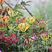 Lilies Of Color Art Print