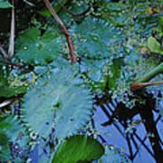 Lillies Of The Garden Art Print