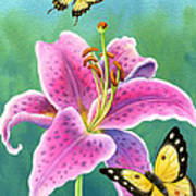 Lily And Butterflies Art Print