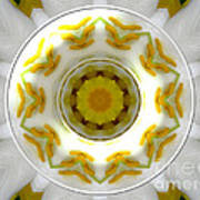 Lily And Daffodil Kaleidoscope Under Glass Art Print