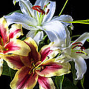 Lily Bouquet Art Print by Garry Gay
