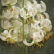 Lily My Love Art Print
