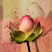 Lily My Lovely - S03d4 Art Print