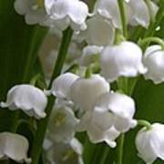 Lily Of The Valley 3 Art Print