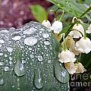Lily Of The Valley After The Rain Art Print
