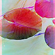 Lily Pad 1 Art Print
